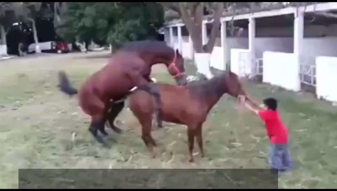 حصان,ينيك,وطاح