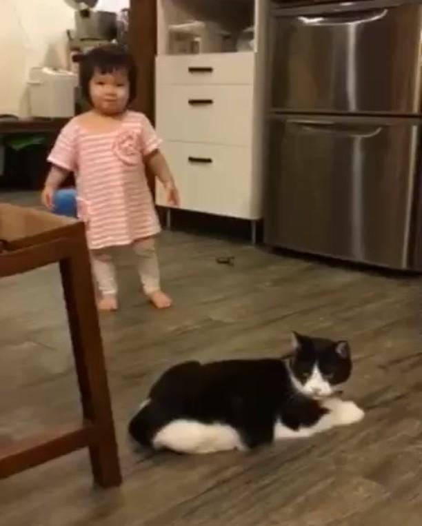 طفل,قط